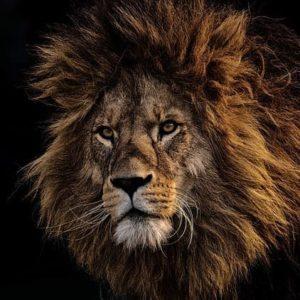 Lion AutoHypnose formation Thonon les bains